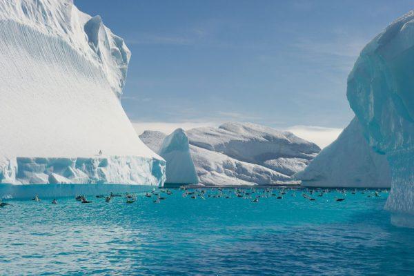 南極・北極クルーズの魅力