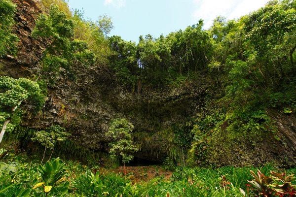 シダの洞窟