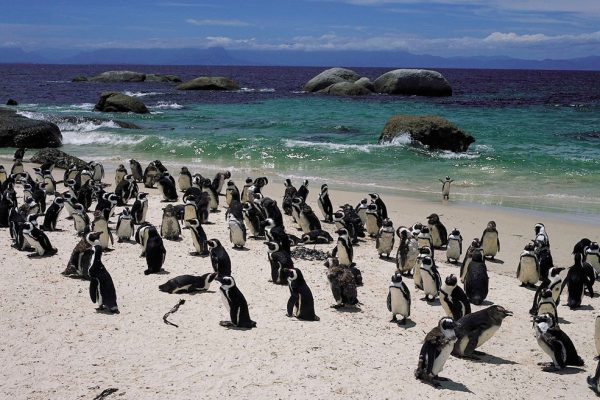 アフリカクルーズで楽しめる動物たちの楽園