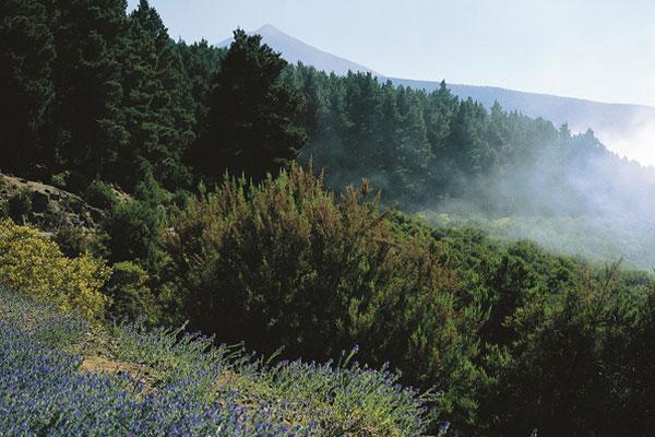 オロタバの谷