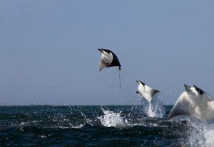 カリフォルニア湾の島嶼および保護地区群