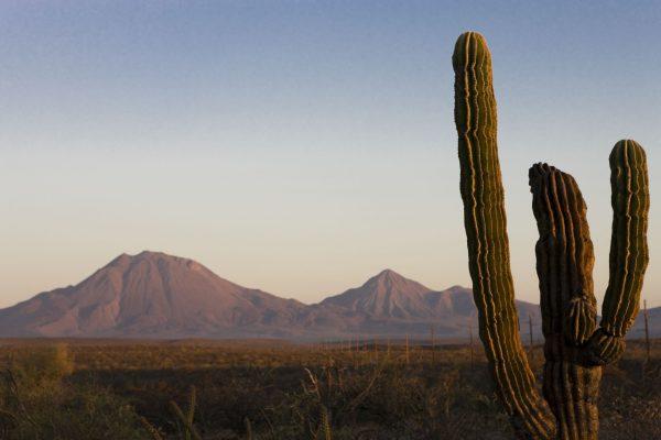 南カリフォルニア半島の荒野にサボテンが続く風景