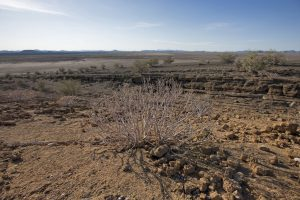 エル・ピナカテとアルタル大砂漠の生物圏保護区