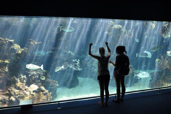 ラグーン水族館