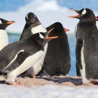 雪と氷の大自然に感動 「南極」への旅が添乗員付きでツアー催行決定