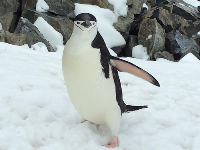 オーシャン・エンデバー南極探検 南極探検 一挙ご紹介