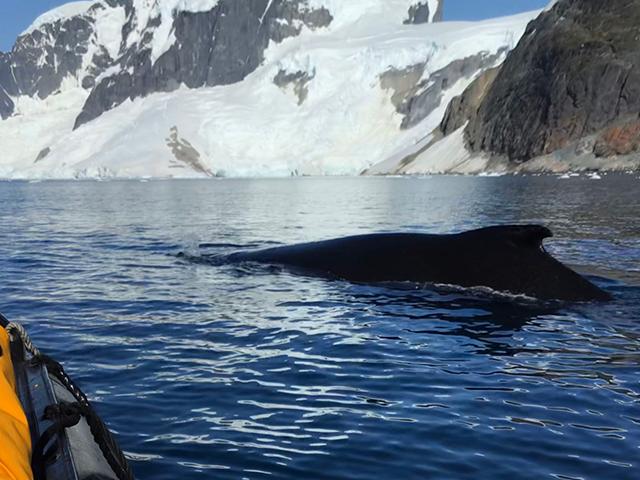オーシャン・エンデバー南極探検 クルージングにふたたび