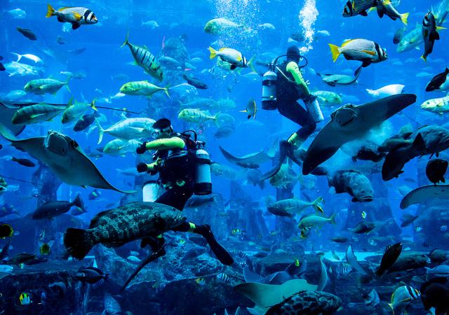 ロストチェンバー水族館